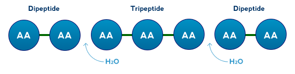 Whey Protein Hydrolysate Powders